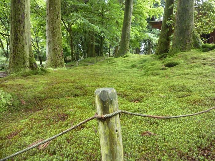 新緑の比叡山_f0205367_185611.jpg