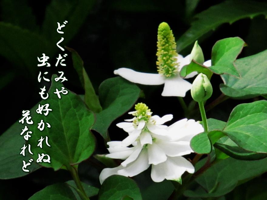 f0137096_1523285.jpg