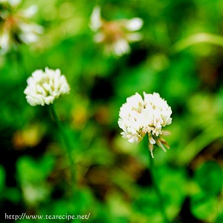 野の花_d0227799_0154550.jpg