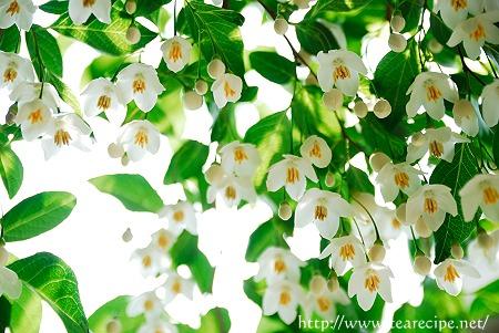 野の花_d0227799_0154578.jpg