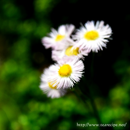 野の花_d0227799_0154664.jpg