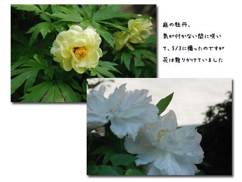 c0051105_0555992.jpg