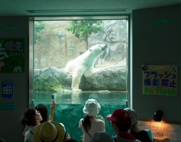 旭山動物園のほっきょくぐま館_d0116009_10534347.jpg