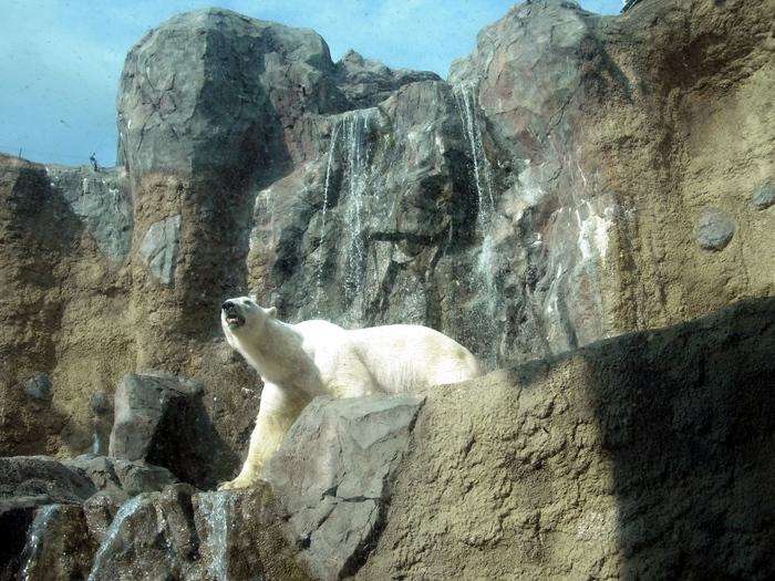 旭山動物園のほっきょくぐま館_d0116009_10593131.jpg