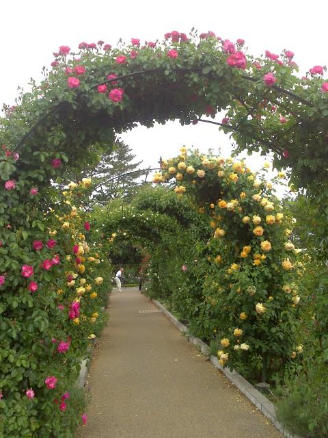 5月のローズガーデン散歩_f0134809_14054445.jpg
