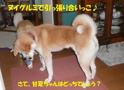 f0121712_6264833.jpg
