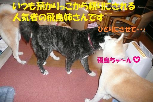 f0121712_784418.jpg