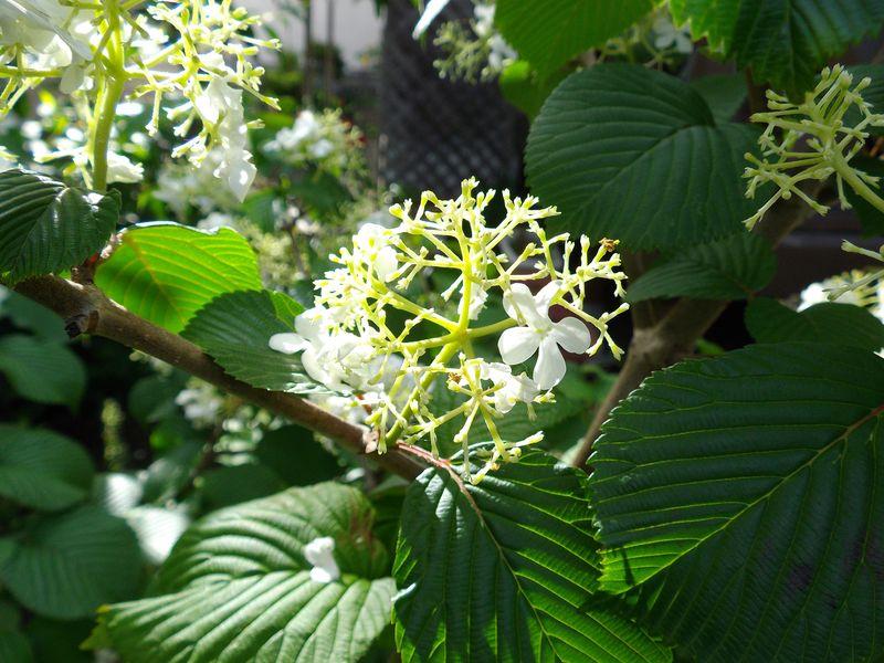 札幌の奥座敷でのオフと白から赤へ移る庭_c0025115_21115246.jpg
