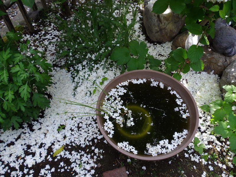 札幌の奥座敷でのオフと白から赤へ移る庭_c0025115_2111566.jpg