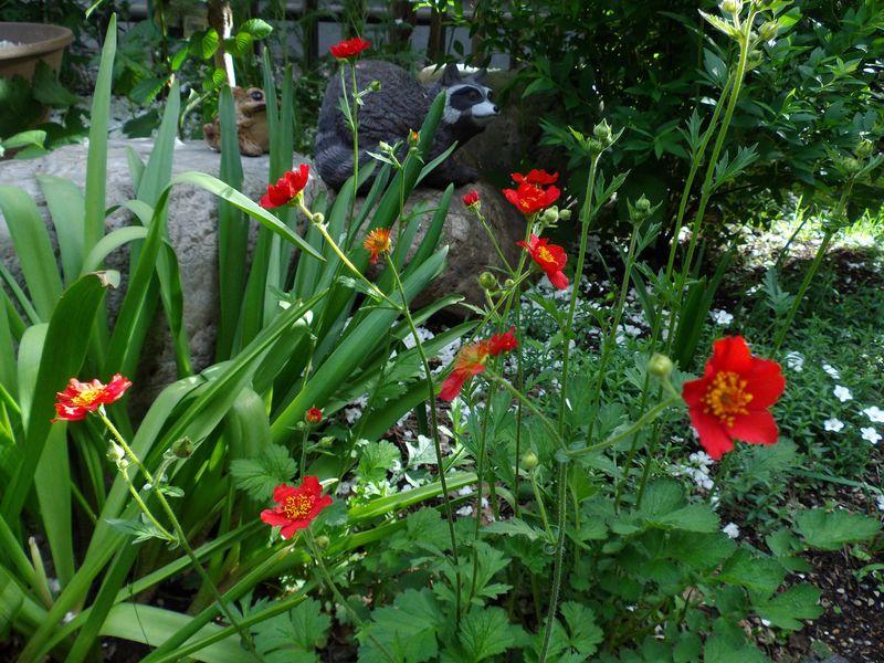 札幌の奥座敷でのオフと白から赤へ移る庭_c0025115_2112171.jpg