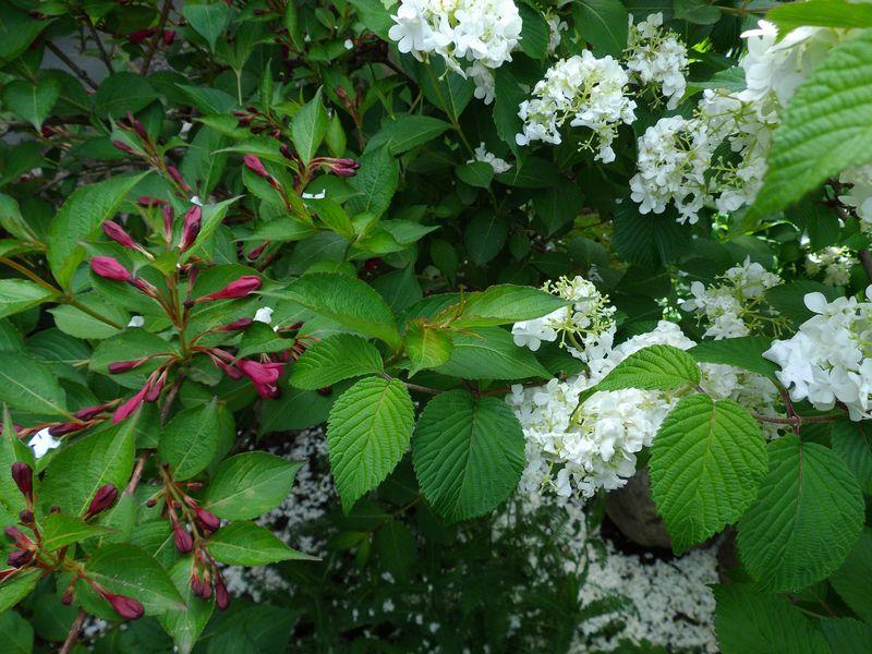 札幌の奥座敷でのオフと白から赤へ移る庭_c0025115_2112687.jpg