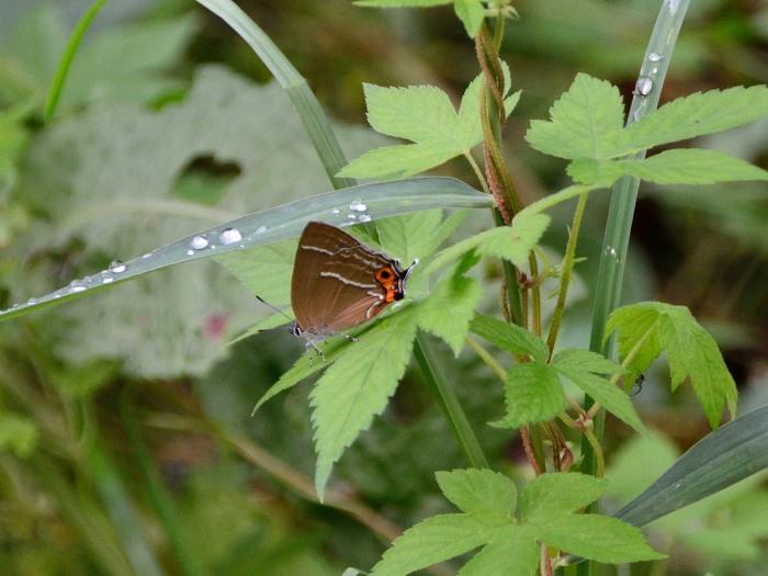 梅雨時の昆虫たち_f0324026_22042685.jpg