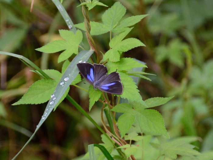 梅雨時の昆虫たち_f0324026_22045316.jpg
