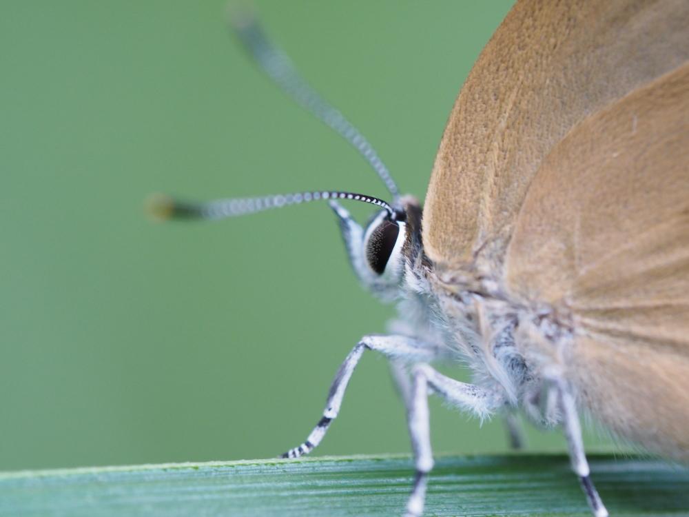 梅雨時の昆虫たち_f0324026_22080859.jpg