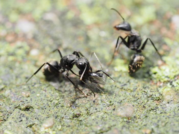 梅雨時の昆虫たち_f0324026_22094514.jpg