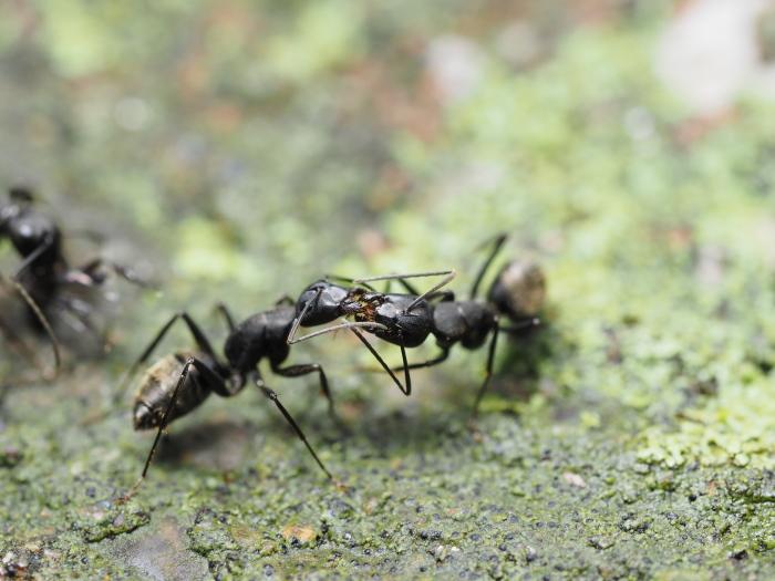 梅雨時の昆虫たち_f0324026_22101857.jpg