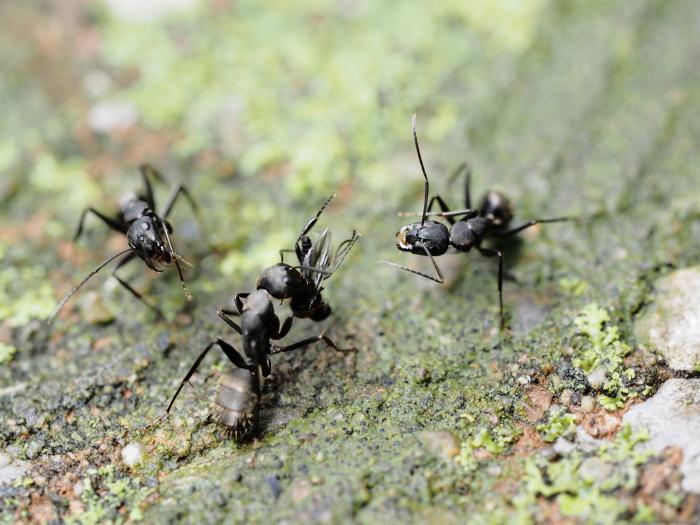 梅雨時の昆虫たち_f0324026_22114780.jpg