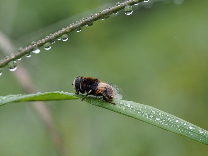 梅雨時の昆虫たち_f0324026_22133843.jpg
