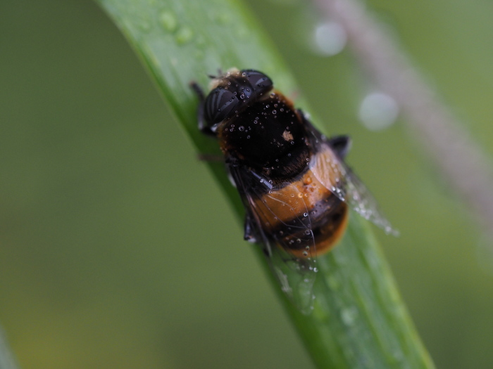 梅雨時の昆虫たち_f0324026_22135282.jpg