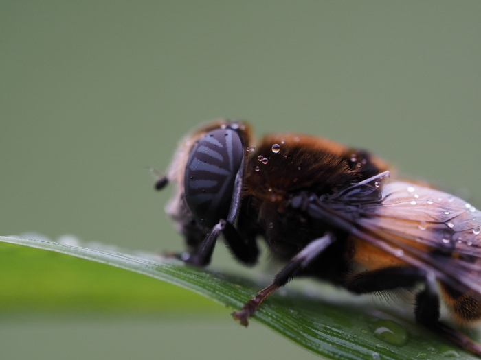 梅雨時の昆虫たち_f0324026_22140553.jpg