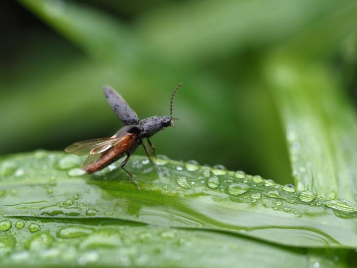 梅雨時の昆虫たち_f0324026_22153567.jpg