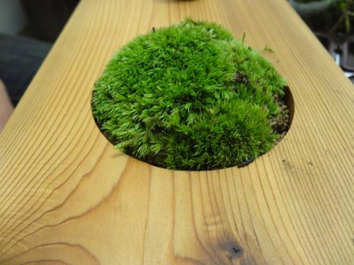 「花より苔になりました。」 苔を語る集い 石河英作_c0103137_1112263.jpg