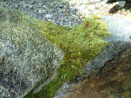 「花より苔になりました。」 苔を語る集い 石河英作_c0103137_11183157.jpg