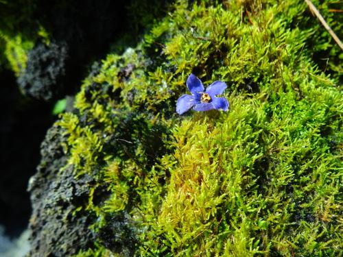 「花より苔になりました。」 苔を語る集い 石河英作_c0103137_1119170.jpg