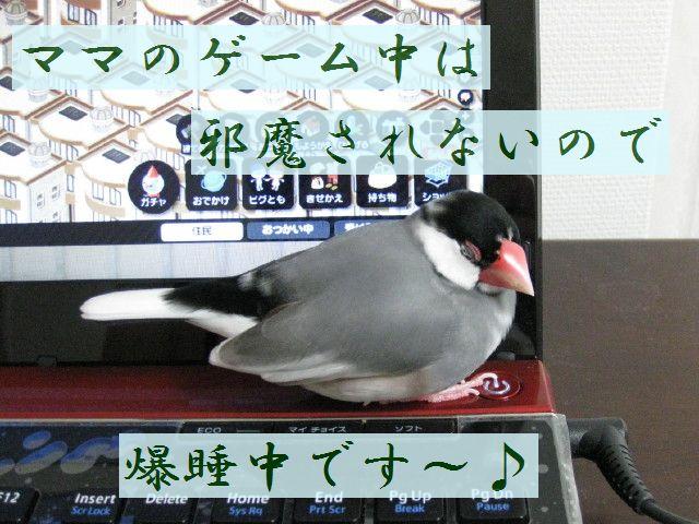 b0158061_20114100.jpg