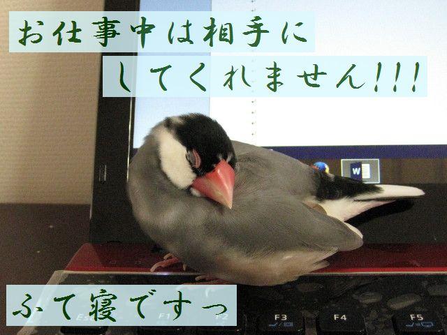 b0158061_2014553.jpg