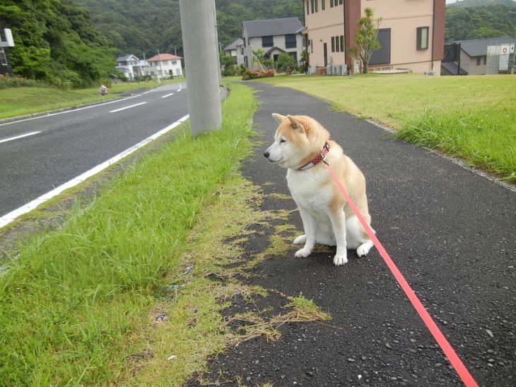 '14,6,9(月)愛ちゃんの食欲復活!_f0060461_1042653.jpg