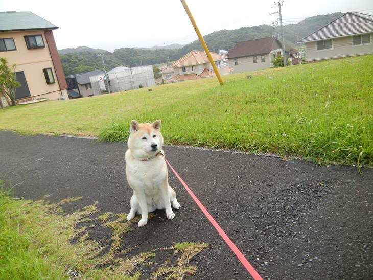 '14,6,9(月)愛ちゃんの食欲復活!_f0060461_1051644.jpg