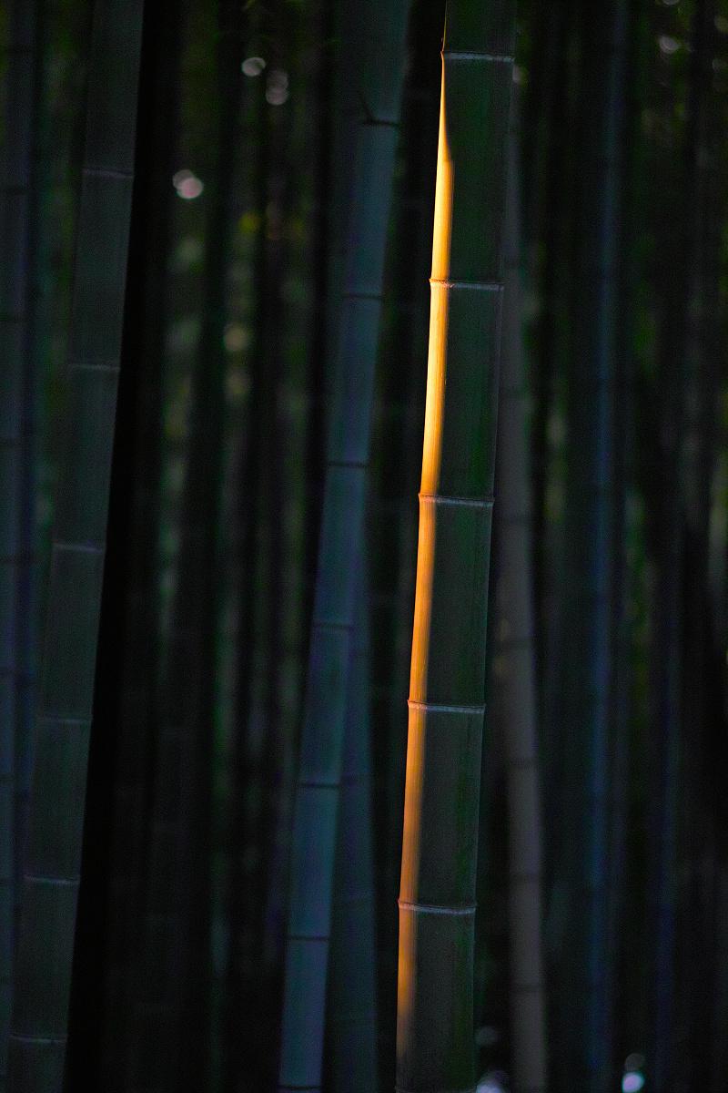 山田池公園                    _f0021869_0101815.jpg