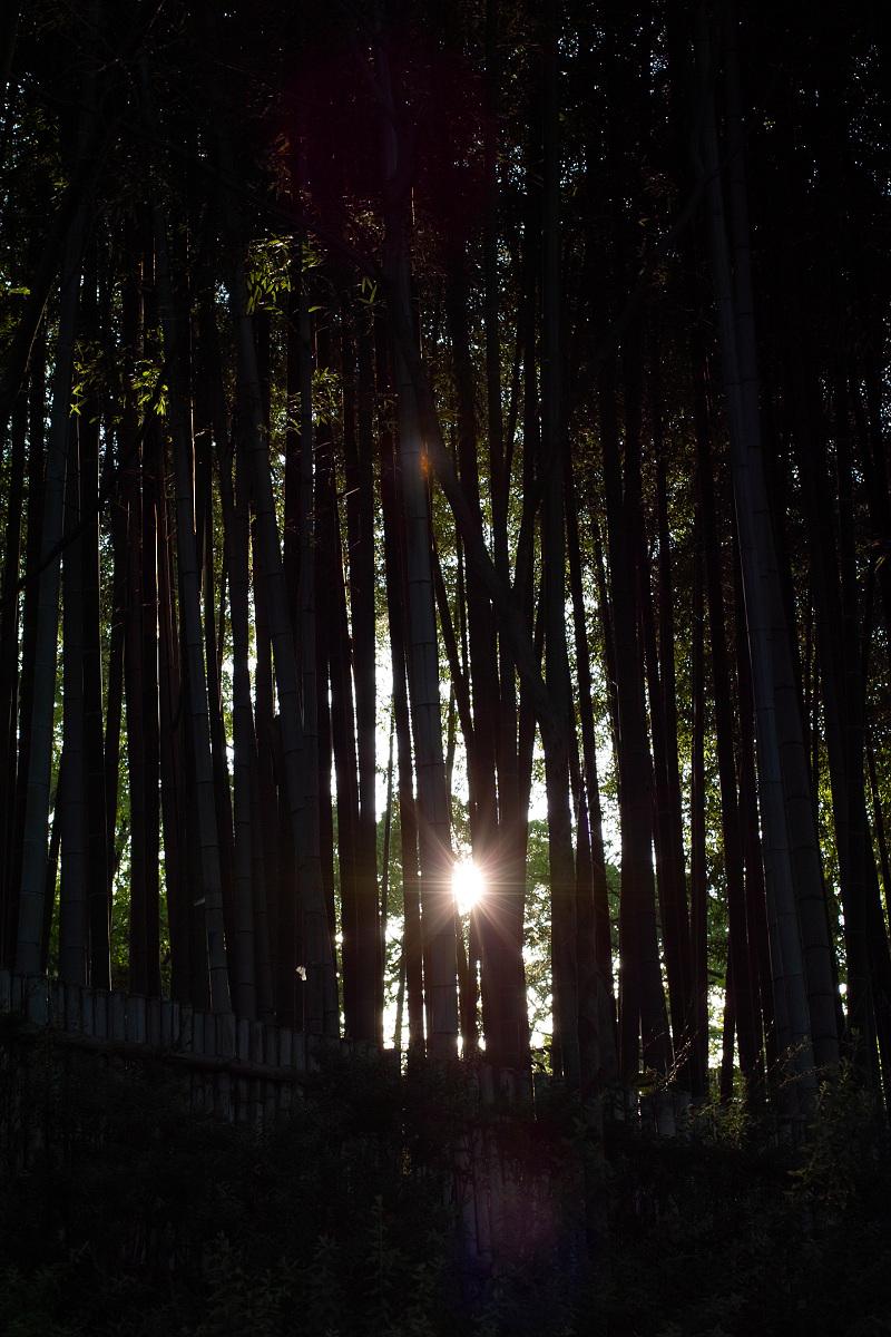 山田池公園                    _f0021869_073757.jpg