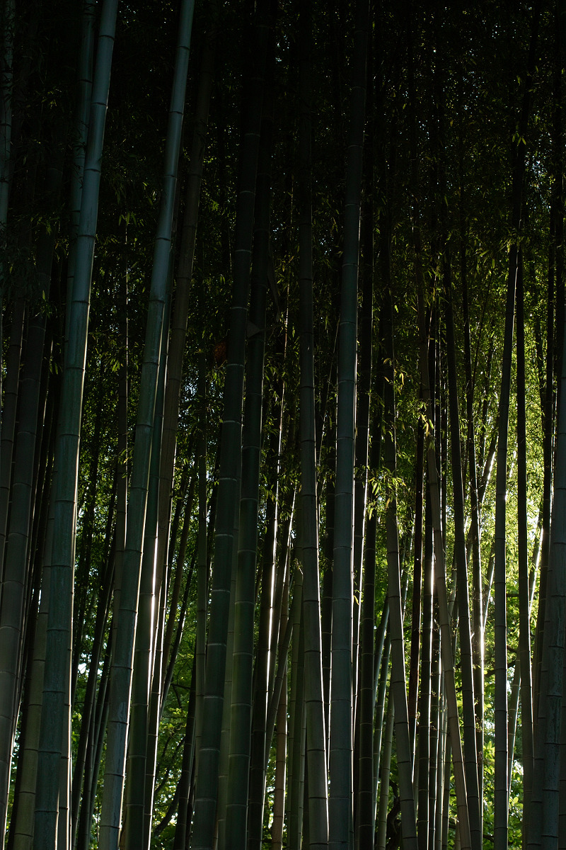 山田池公園                    _f0021869_0767.jpg