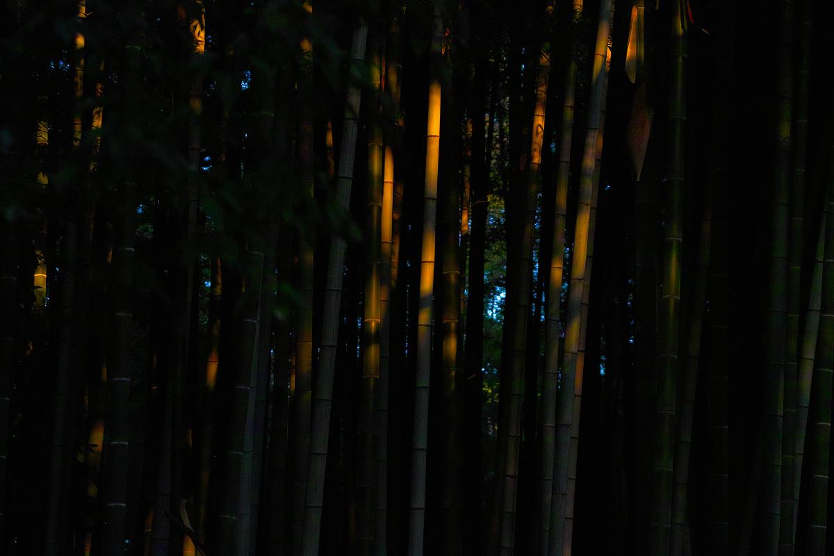 山田池公園                    _f0021869_093844.jpg