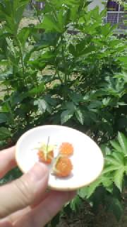 食用の庭_d0177286_11552843.jpg
