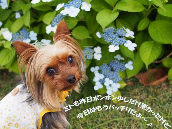 紫陽花の頃♪_e0125894_13203180.jpg