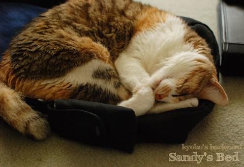 Sandyのベット_b0253205_1362415.jpg