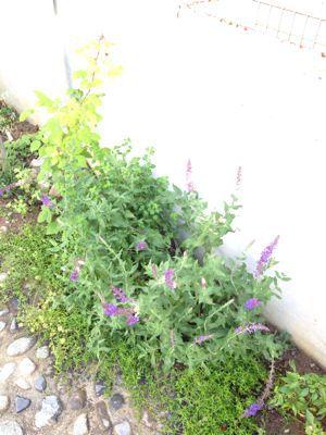 やさしい庭の手入れ_e0233111_7335026.jpg