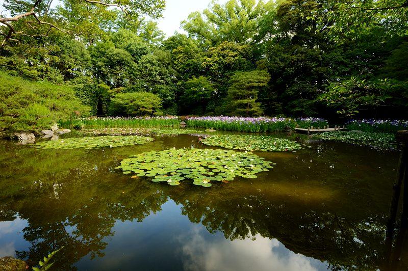 平安神宮の花菖蒲・其の一_f0032011_18122349.jpg