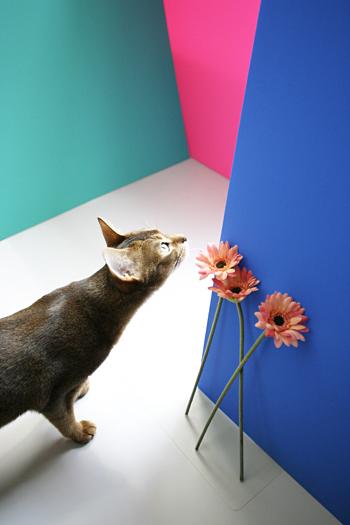 [猫的]THE GRAND BUDAPEST HOTEL_e0090124_014369.jpg