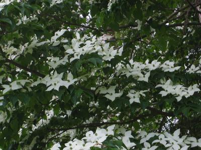 白い花_e0019167_7431977.jpg