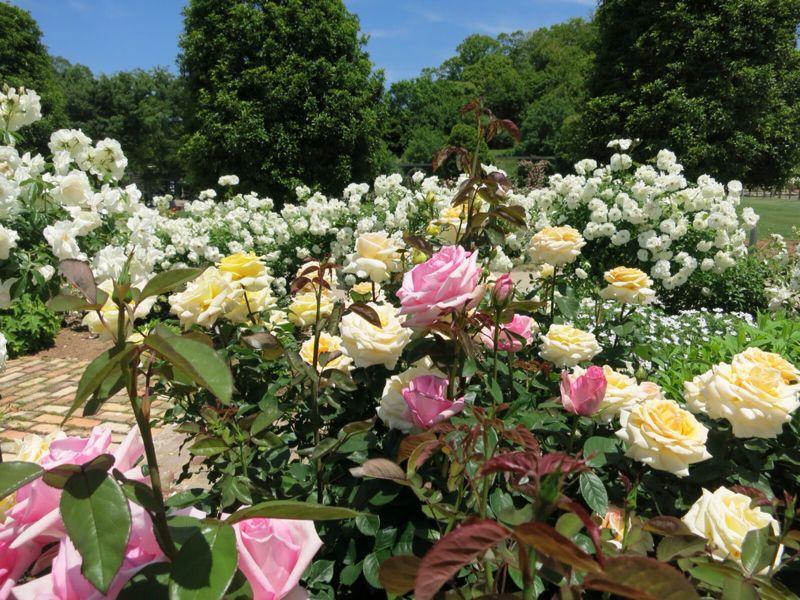 花フェスタ記念公園2_e0233674_1742892.jpg