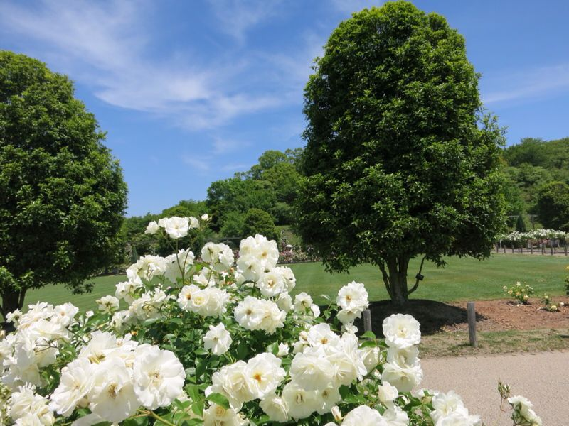 花フェスタ記念公園2_e0233674_1742917.jpg