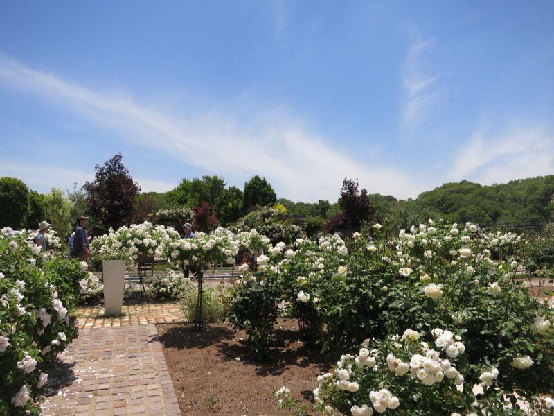 花フェスタ記念公園2_e0233674_1743067.jpg