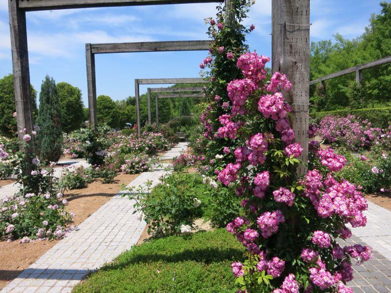 花フェスタ記念公園2_e0233674_1743293.jpg