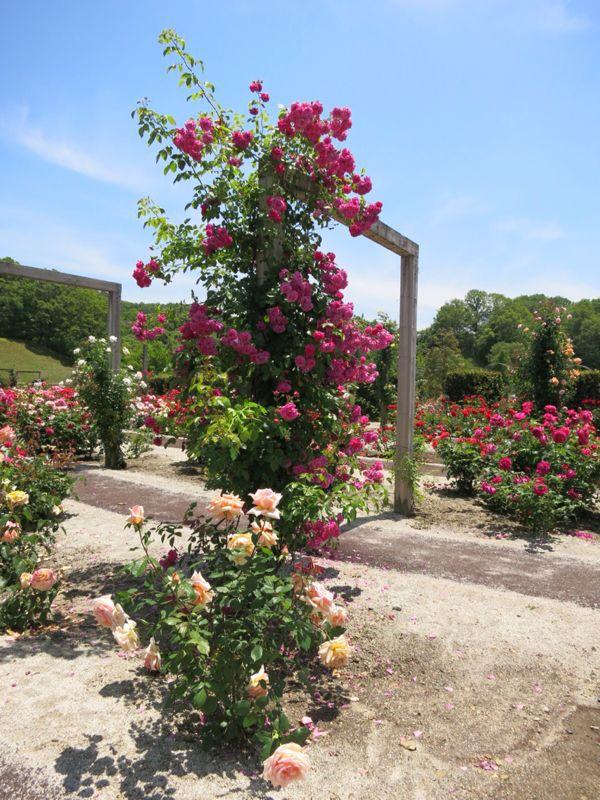 花フェスタ記念公園2_e0233674_1743332.jpg