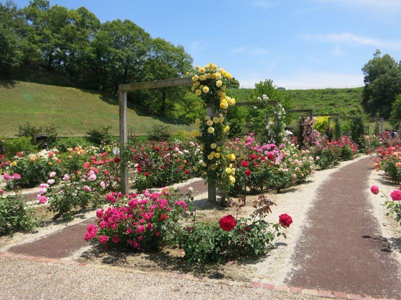 花フェスタ記念公園2_e0233674_1743991.jpg