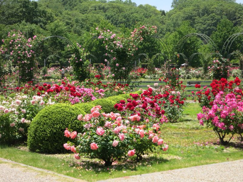 花フェスタ記念公園2_e0233674_1744086.jpg